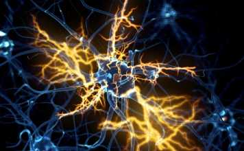 Insight into motor neurone death could pave way for ALS treatments