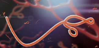 Conditional European approval for Merck's Ebola virus vaccine