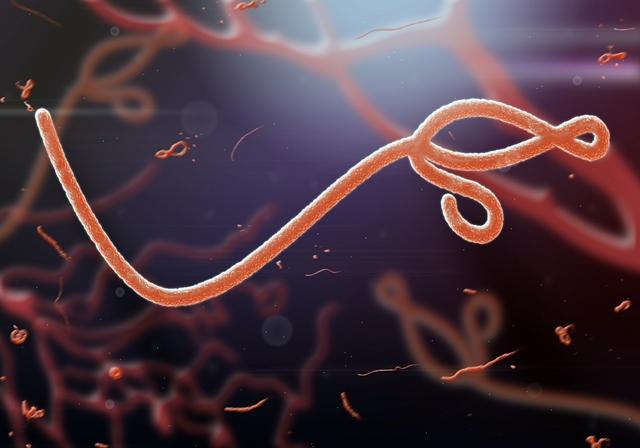 Regeneron's antibody cleared to treat Ebola in US