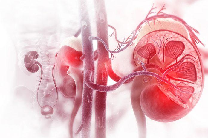 Evotec & Vifor Pharma to develop novel nephrology therapeutics