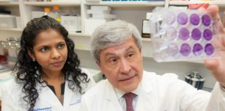 Two-drug combo that halts cancer cell growth discovered